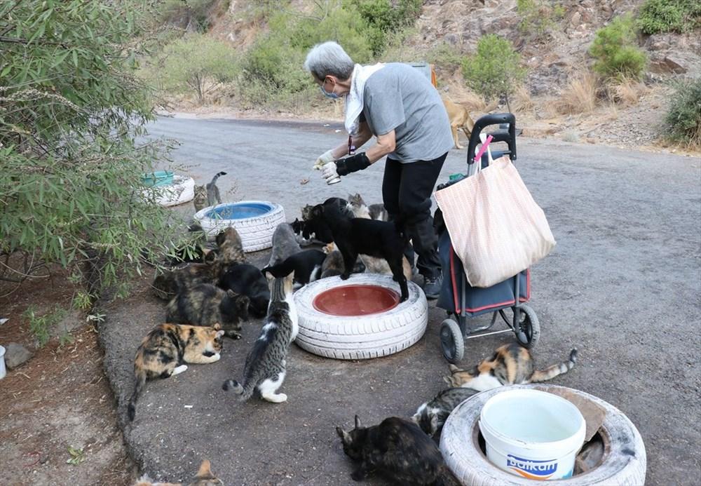Her gün 200 sokak kedisini elleriyle besliyor - 5