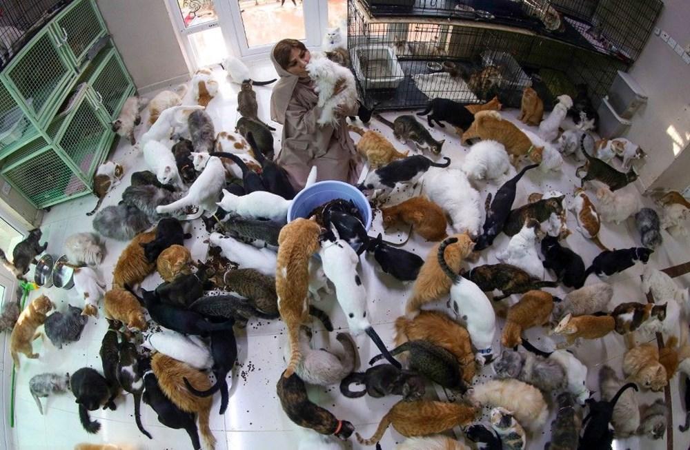 Evinde 480 kedi ve 12 köpeğe bakıyor - 6