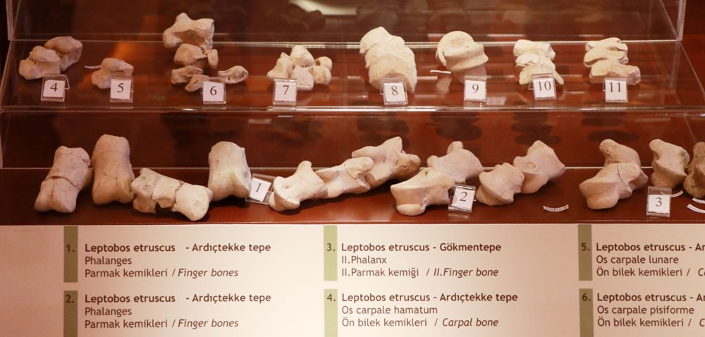 İki milyon yıllık fosiller Burdur Doğa Tarihi Müzesi'nde sergileniyor - 3