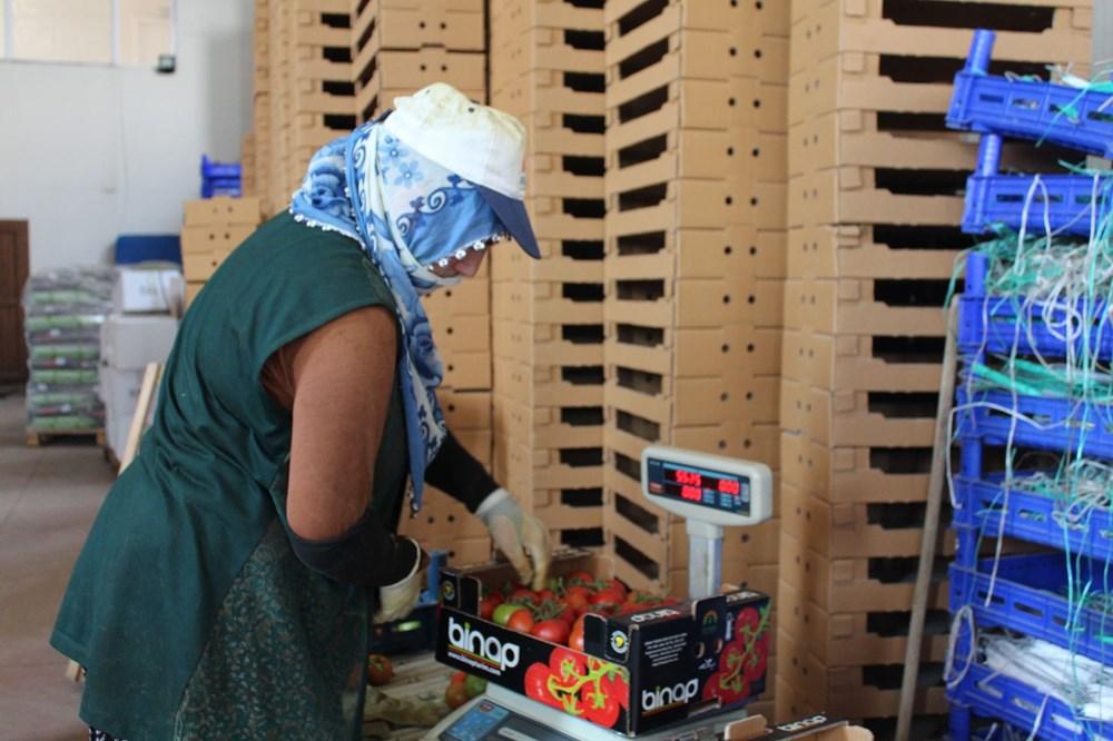 Elazığ'da topraksız tarım, kadınlara iş kapısı oldu - 7