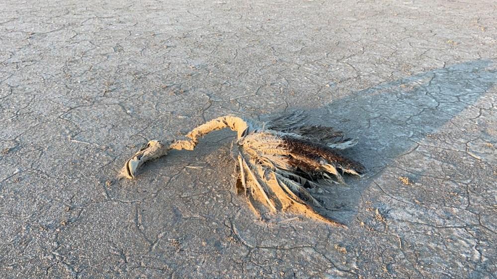 Tuz Gölü'nde toplu flamingo ölümleri: Soruşturma başlatıldı - 10