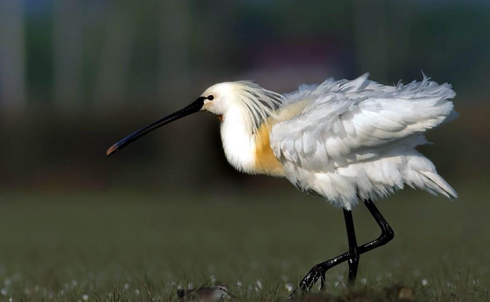Fotoğraf tutkunu cumhuriyet savcısı 358'inci kuş türünü belgeledi - 9