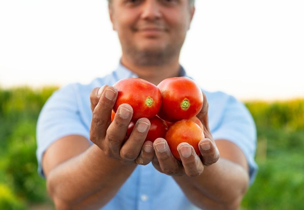 Özbekistan'dan corona virüse karşı domates aşısı - 5