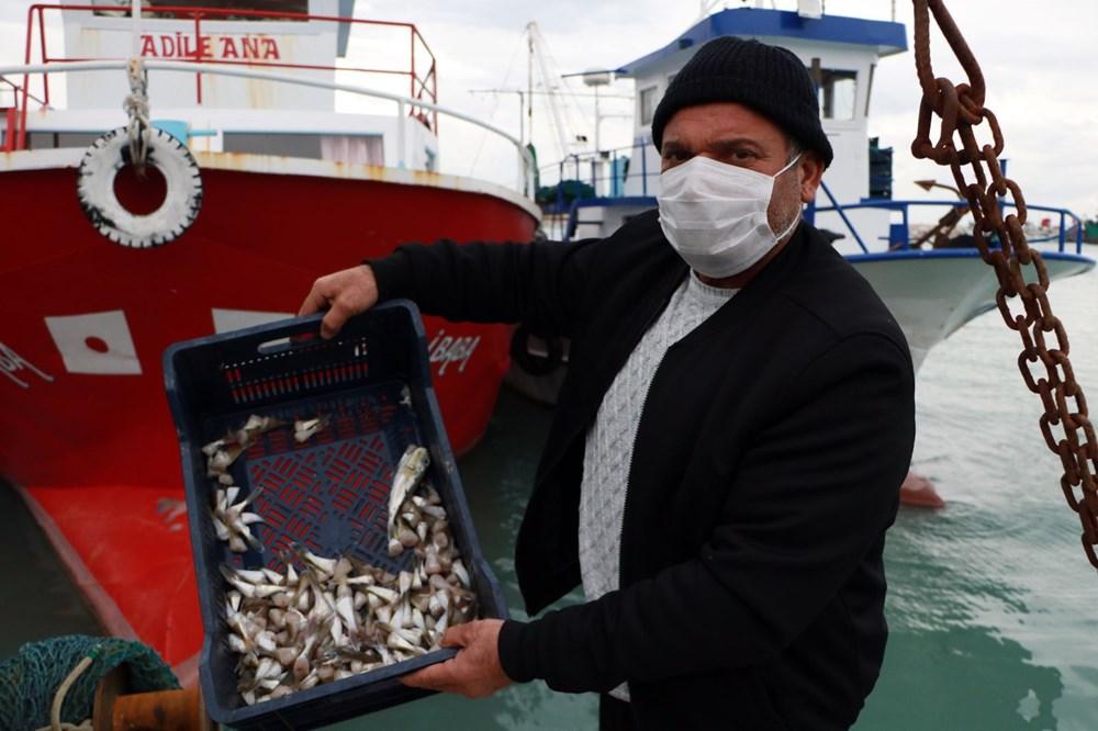Balıkçılar balon balığının diğer türlerine de kuyruk parası istiyor - 7