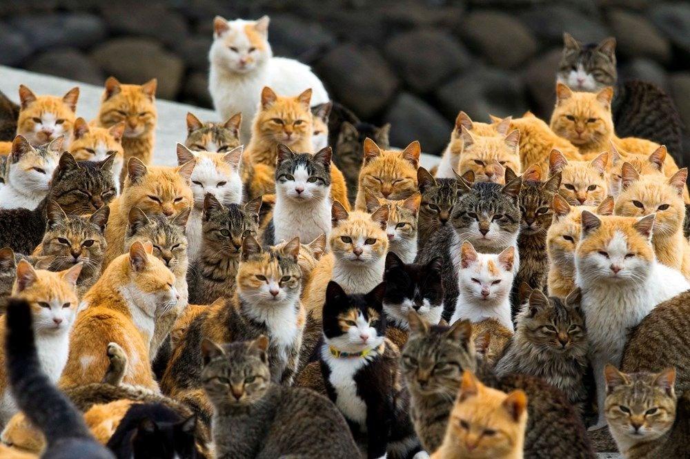 Japonya'daki kedi adası: Aoshima - 2