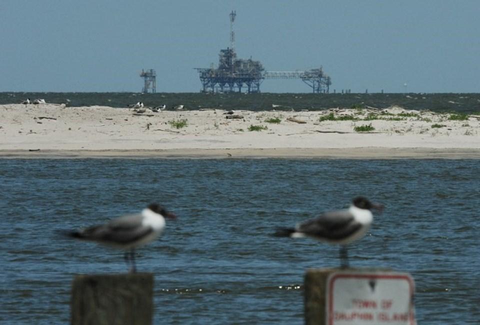 Plastik üretiminin tüm dünyada artmasıyla birlikte deniz kuşlarının bu maddeleri tüketme oranı da hızlı bir şekilde artış gösterdi