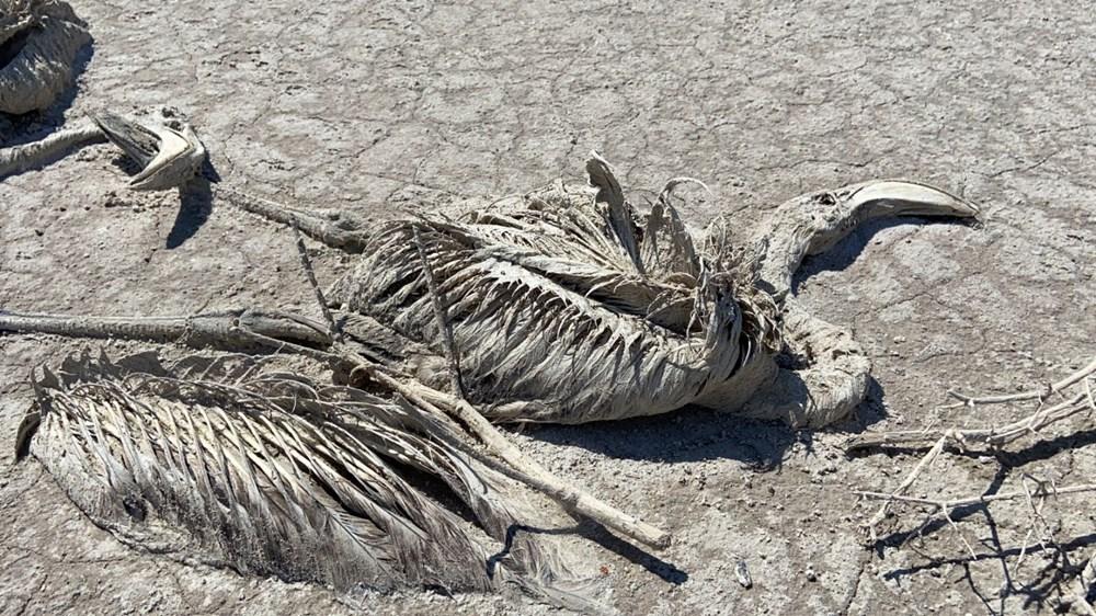 Tuz Gölü'nde toplu flamingo ölümleri: Soruşturma başlatıldı - 7