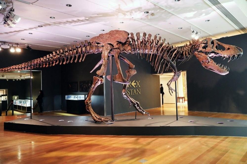 67 milyon yaşındaki dinozor iskeleti açık artırmayla satılacak - 5