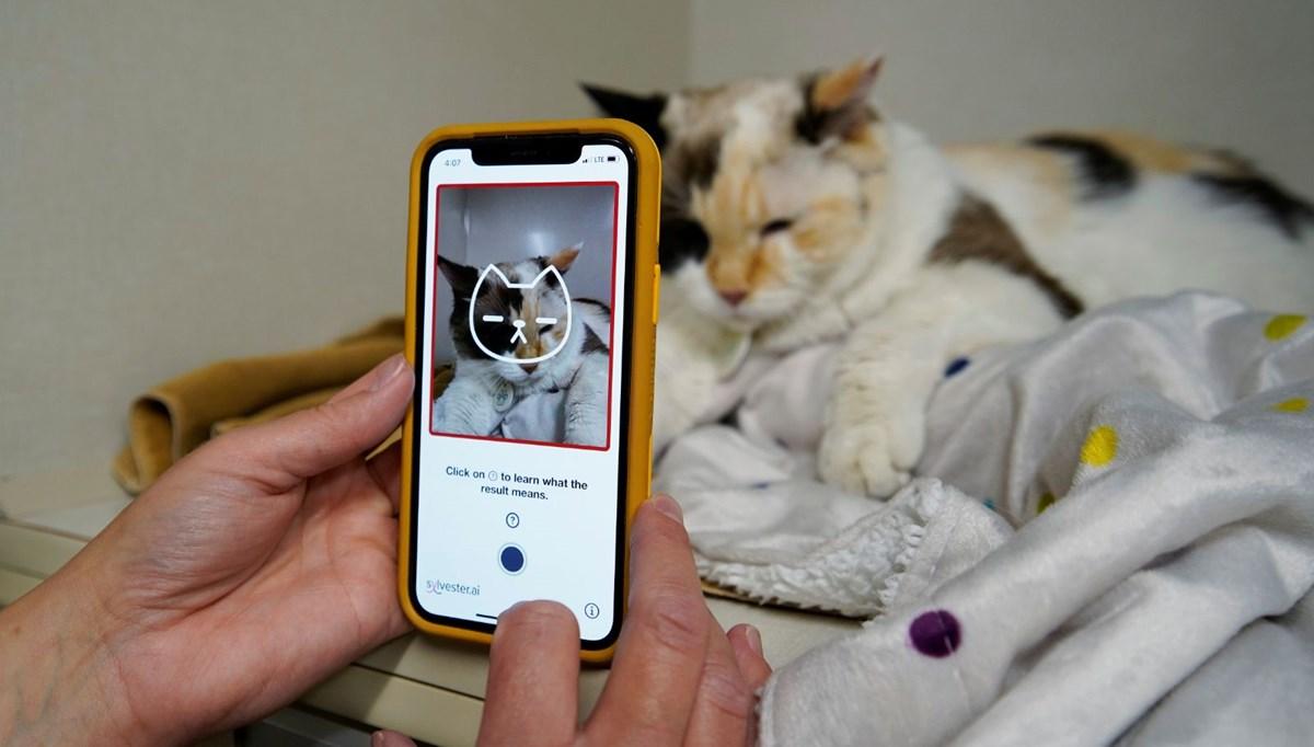 Kedinizin sağlık durumu nasıl? Tek bir fotoğrafla öğrenmek mümkün