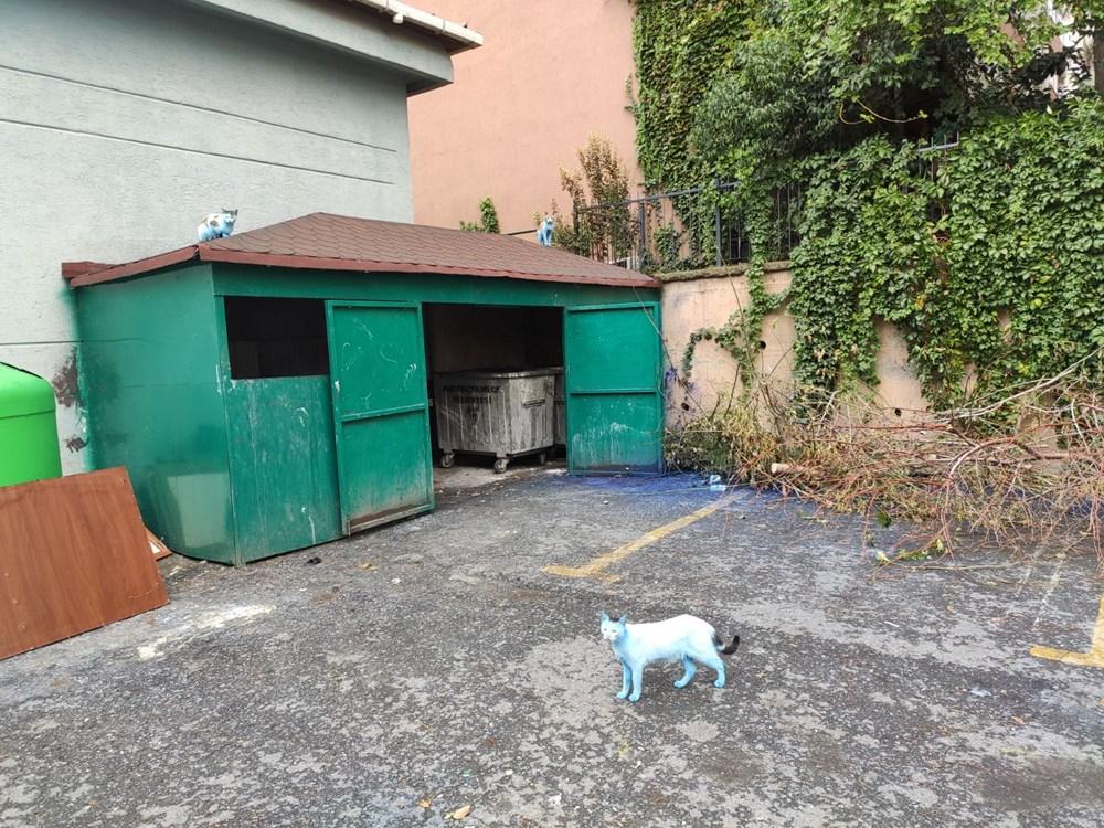 Mavi kediler görenleri şaşırttı - 2