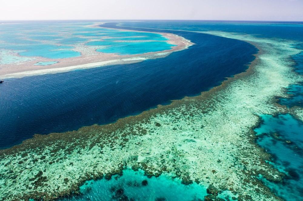 İklim değişikliği, Büyük Set Resifi'ndeki mercanların yarısını yok etti - 3