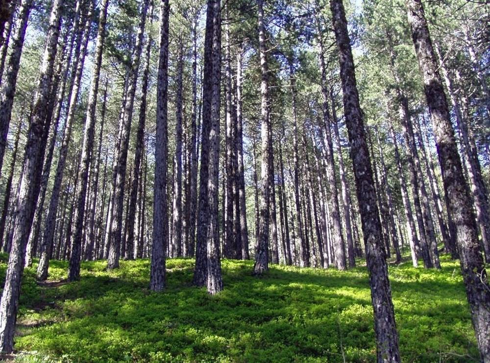 Türkiye'nin Milli Parkları (Türkiye'deki milli parkların listesi ve isimleri) - 42