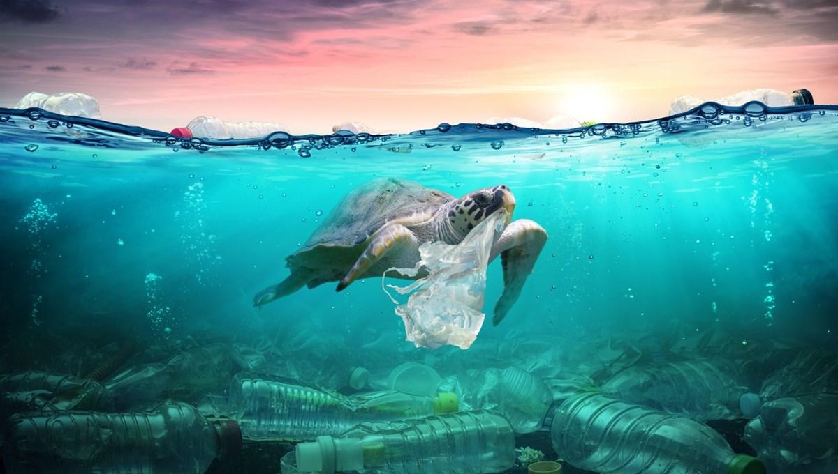 Plastic pollution reaches chemical levels in the Mediterranean: Caretta carettas are dying