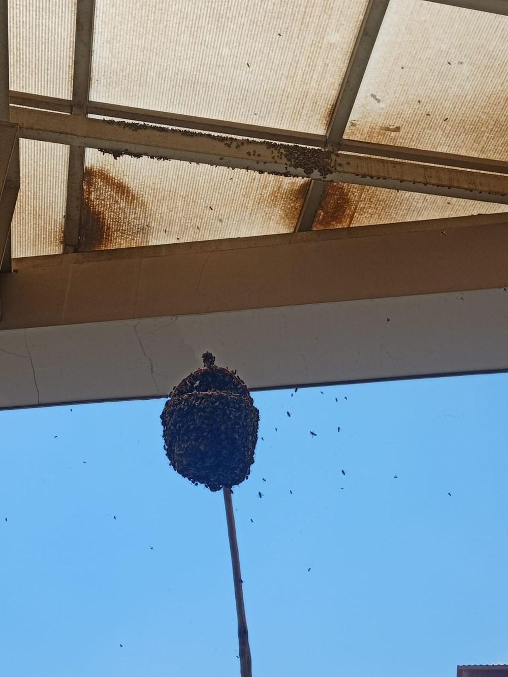 Hastanede panik: Acil servisi arılar bastı - 2