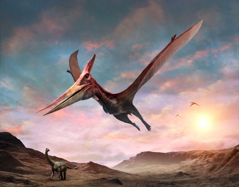 Avustralya'da 105 milyon yıllık teruzor fosili bulundu: Efsanevi bir ejderhaya benzeyen en yakın tür - 5