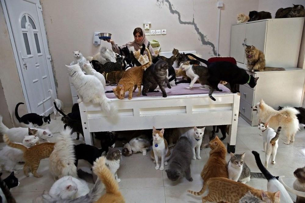 Evinde 480 kedi ve 12 köpeğe bakıyor - 4