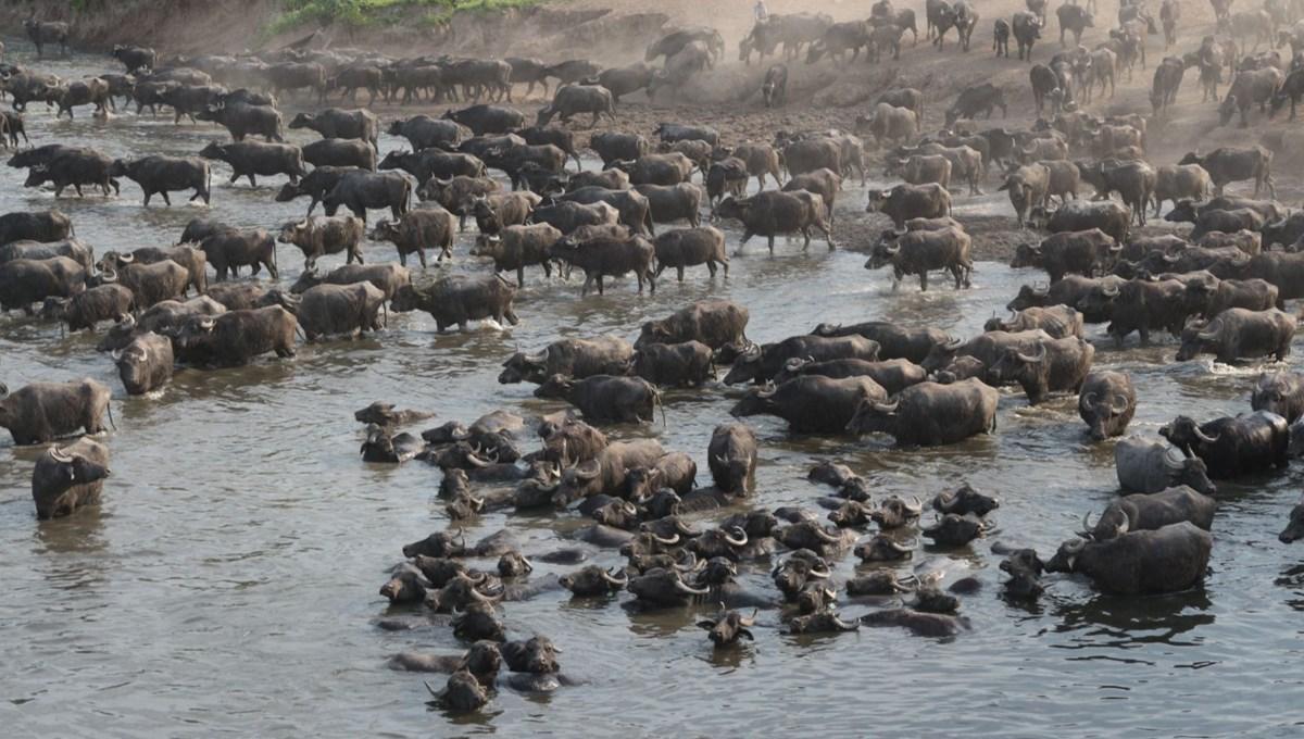 Balıkesir Plain, not Africa Serengeti Park