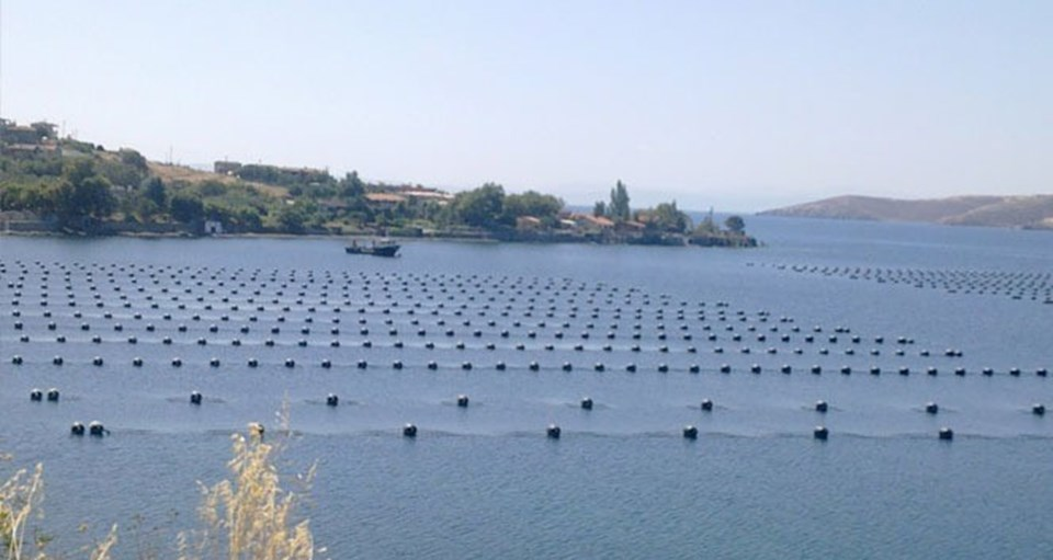 Marmara Denizi'nde bulunan bir midye çiftliğinden fotoğraf.