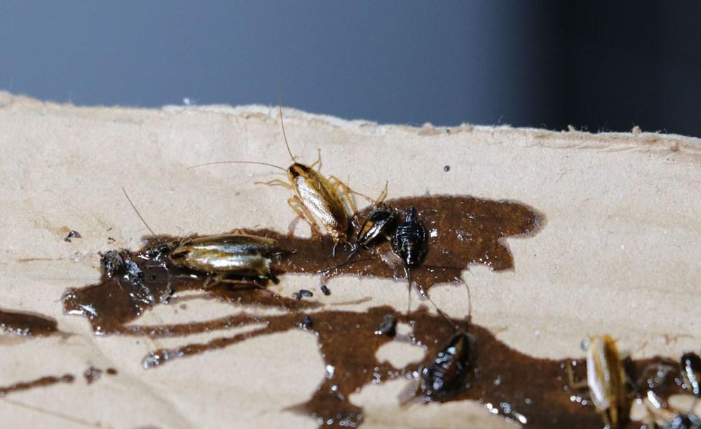 Adana'da bir mahalleyi böcekler istila etti - 4