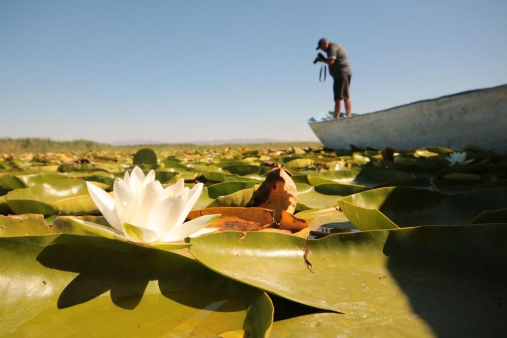 Türkiye'nin en büyük nilüfer bahçesi: Beyşehir Gölü - 5