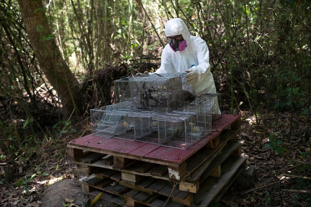Ebola'yı keşfeden doktor: İnsanlık Covid-19'dan daha kötü salgınlar görecek - 2