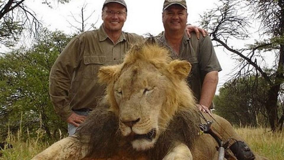 Geçtiğimiz günlerde ortaya çıkan skandalın ardından ABD'li diş hekimi Walter James Palmer'ın aslanın öldürülmesi için kendisine yardım eden kişilere 50 bin dolar ödediği ortaya çıkmıştı.