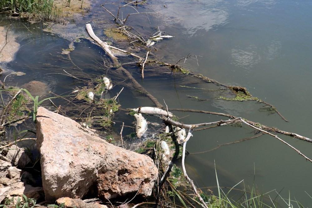Türkiye'nin en uzun nehri Kızılırmak'ta toplu balık ölümleri - 4
