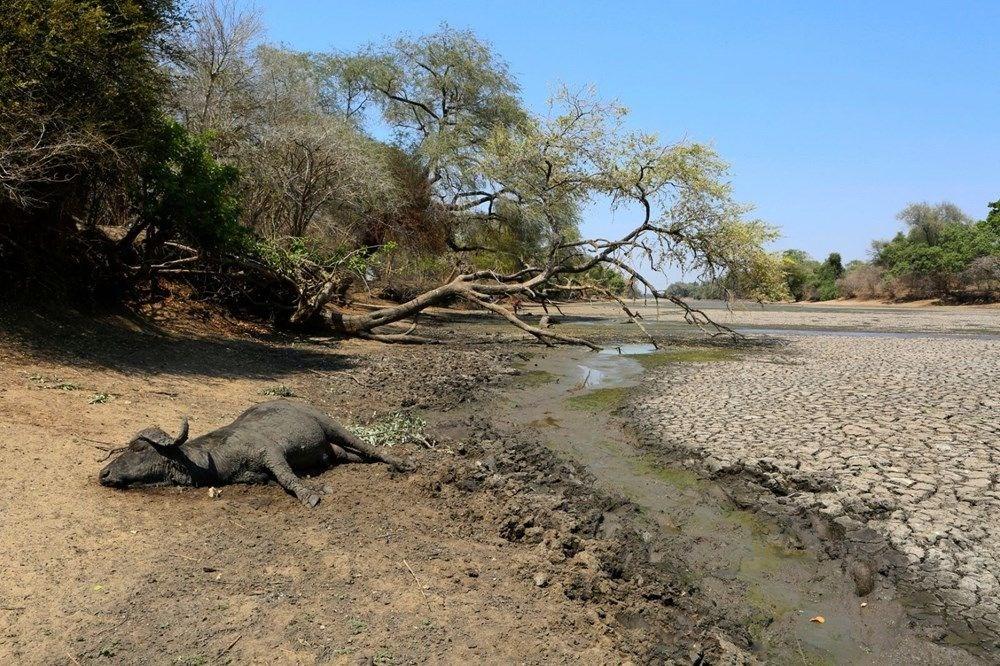 Bostvana'daki gizemli fil ölümlerinin nedeni açıklandı - 4