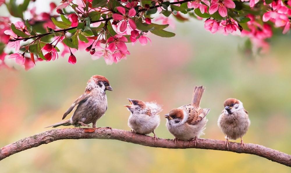 Dünyada kaç kuş yaşıyor? (İlginç bilgiler) - 1