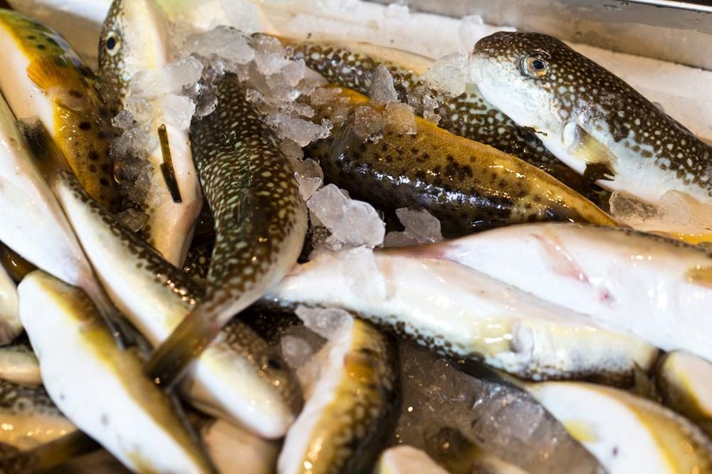 Japon şef anlattı: Zehirli balon balığını sertifikası olmayan yapamaz - 2