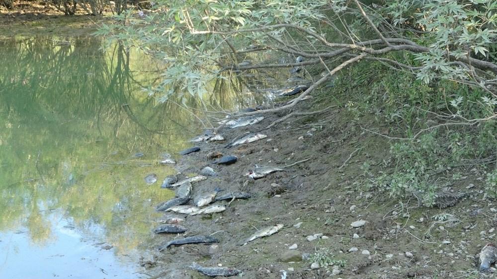 Manavgat'ta balık ölümleri - 7