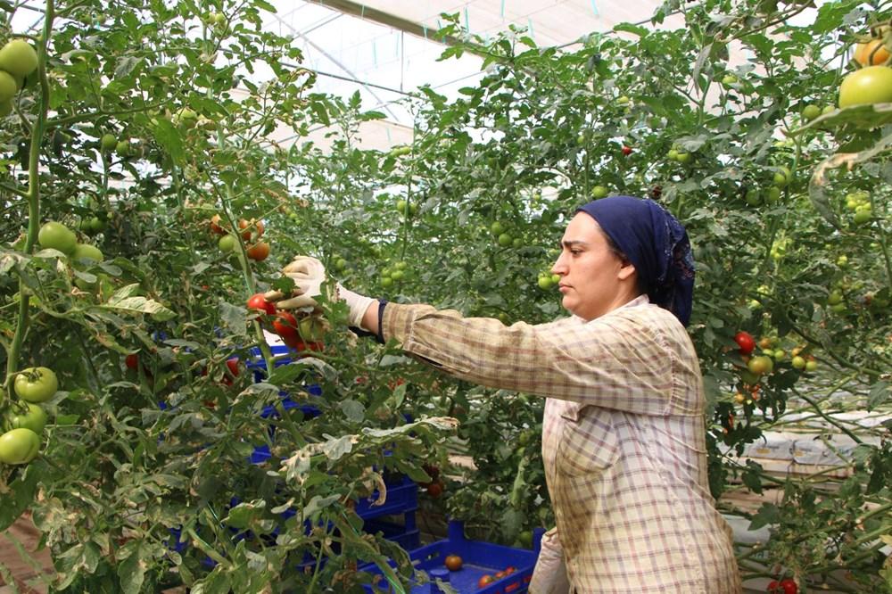 Elazığ'da topraksız tarım, kadınlara iş kapısı oldu - 10