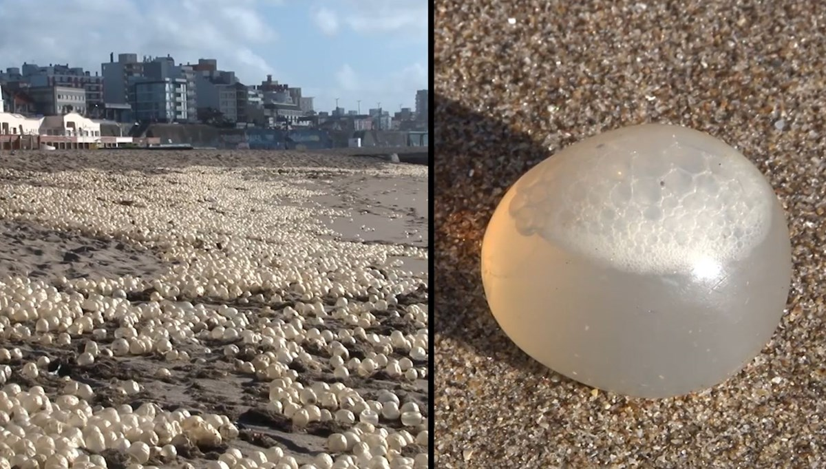 Extraordinary view: thousands of eggs hit the beach