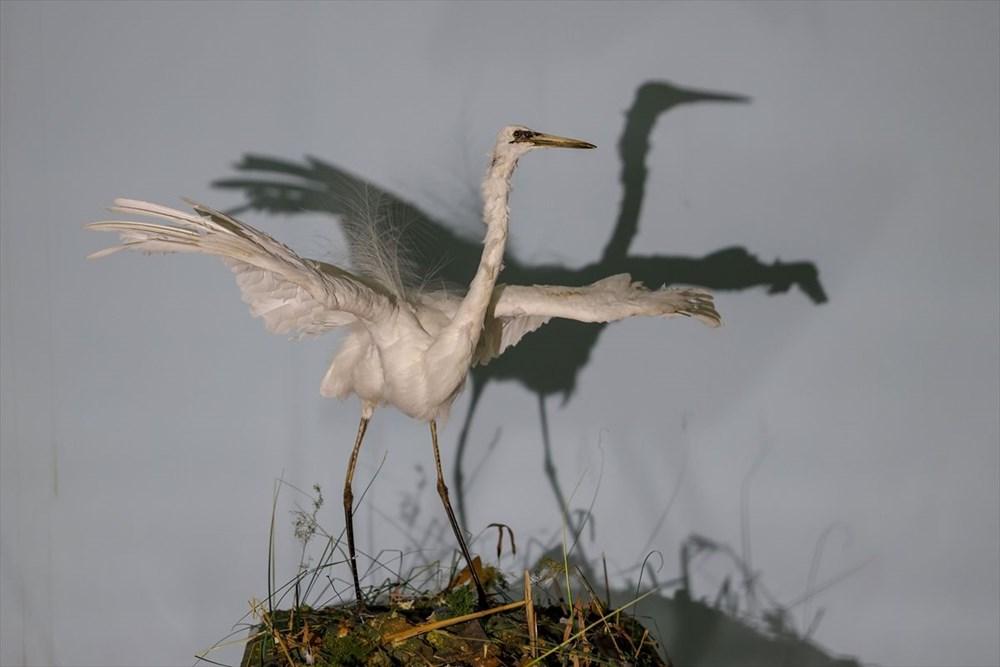 Van'da yaban hayvanları tahnit sanatıyla müzede tanıtılacak - 11