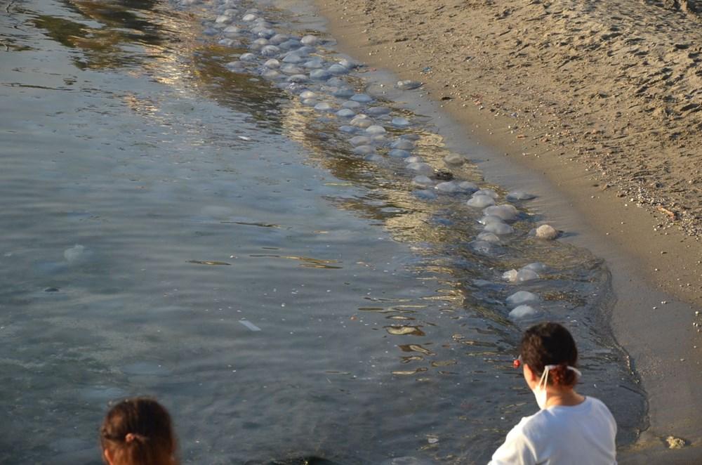 İstanbul'da korkutan dev denizanaları: Her biri en az bir kilo ağırlığında - 21