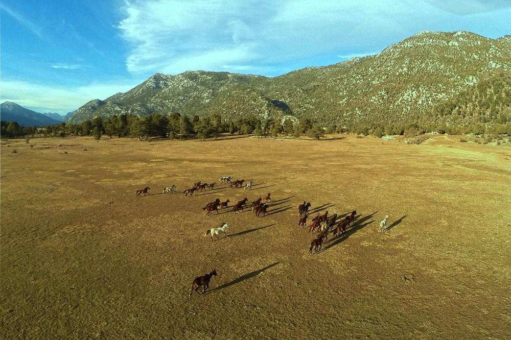 Soyları Osmanlı süvari birliğine dayanıyor! Torosların vahşi güzelliği 'Yılkı atları' - 3