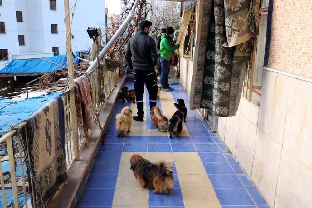 Ankara'da 'medyum'un evine baskın: 20 köpek ve 16 kediye el konuldu - 10