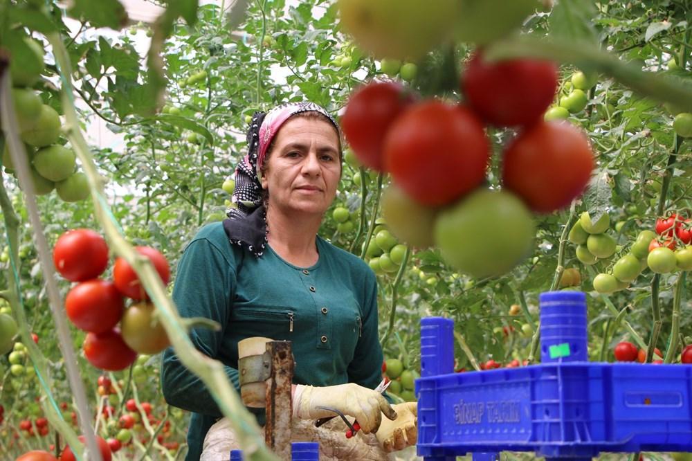 Elazığ'da topraksız tarım, kadınlara iş kapısı oldu - 4