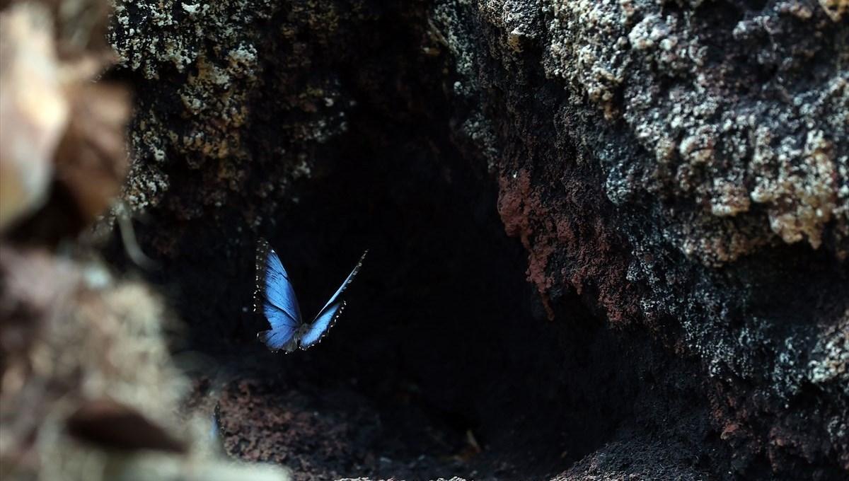Avrupa'nın en büyüğü: Konya Tropikal Kelebek Bahçesi