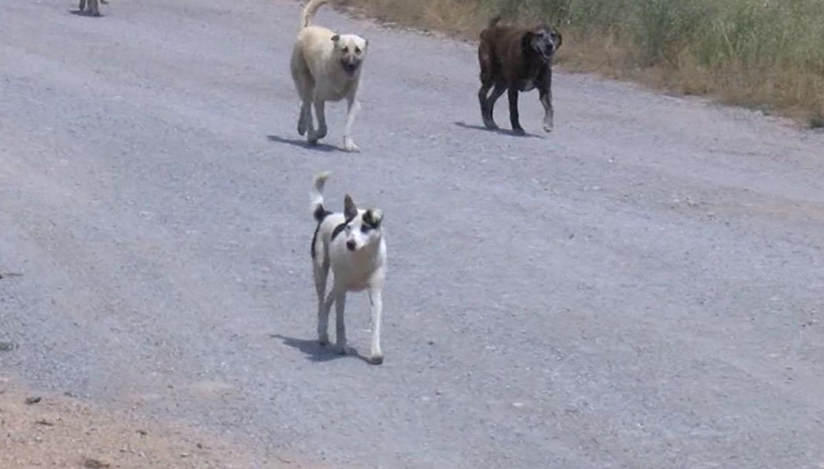 17 köpeği işkenceyle öldürdüler