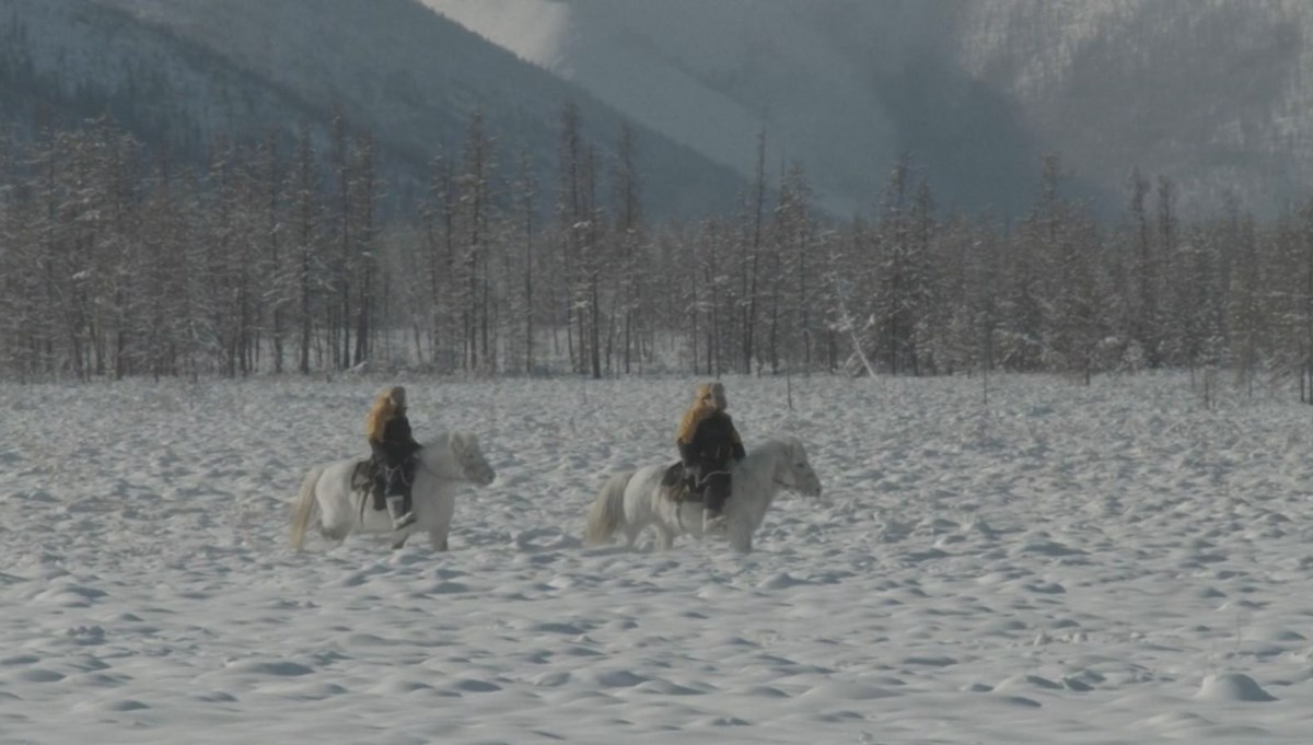 Record attempt with the world's toughest horses