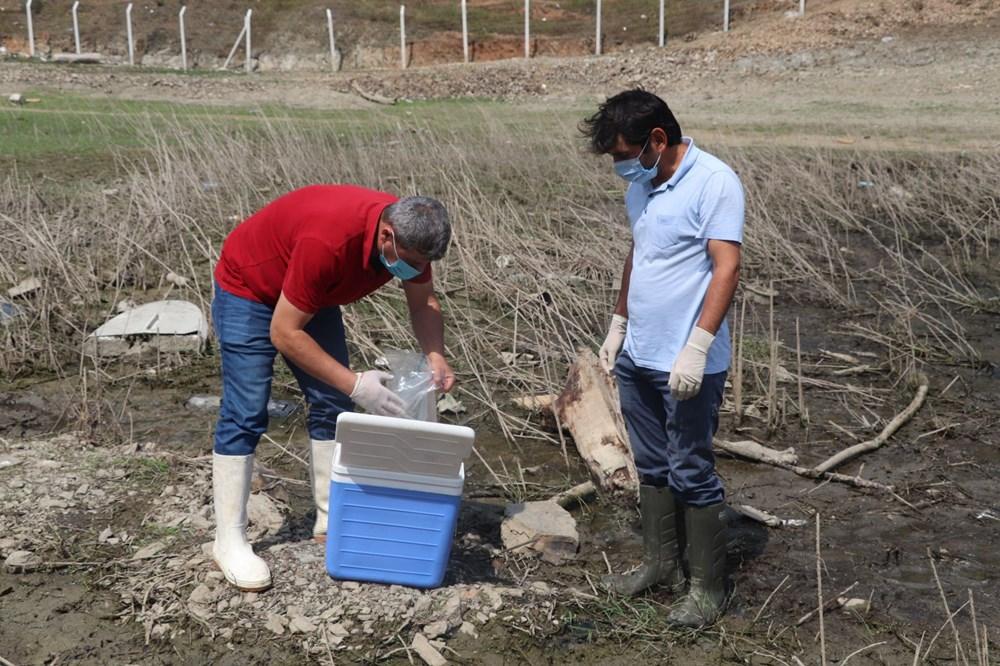 Alibeyköy Barajı'nda balık ölümleri: İnceleme başlatıldı - 4