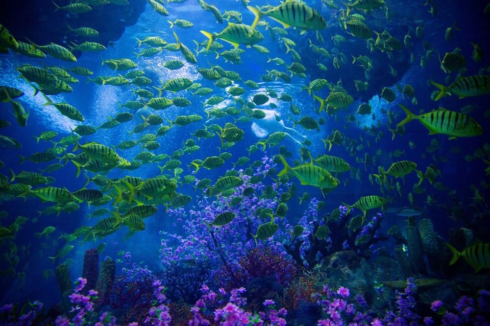 İklim değişikliği, Büyük Set Resifi'ndeki mercanların yarısını yok etti - 7