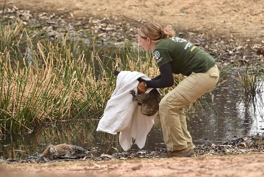 Avustralya'daki yangınlar 3 milyar hayvanı etkiledi - 8