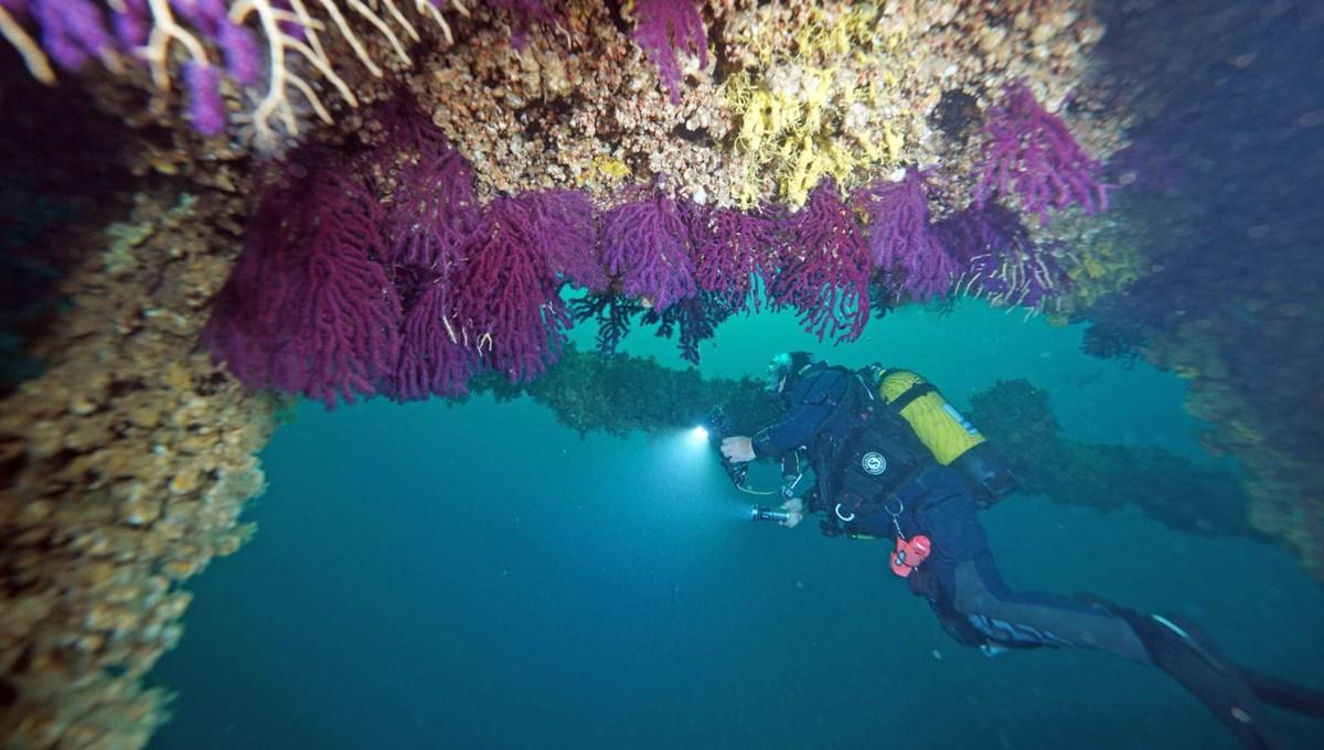 Çanakkale Boğazı'nda tarihi batıklara dalış turizmi başladı