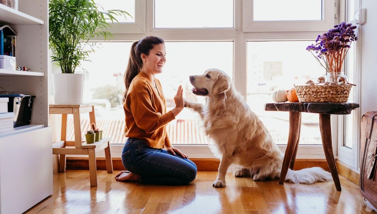 Silikon Vadisi'nde köpeklerin ömrünü insanlardakine benzer bir şekilde uzatmak için çalışma başlatıldı