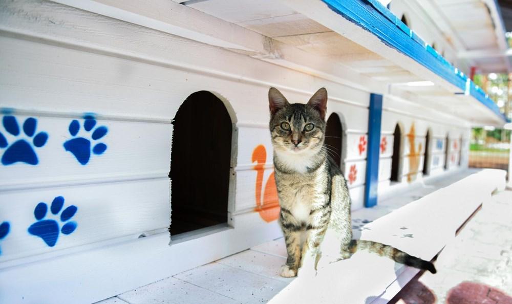 3 katlı, 64 odalı 'kedi apartmanı' - 8