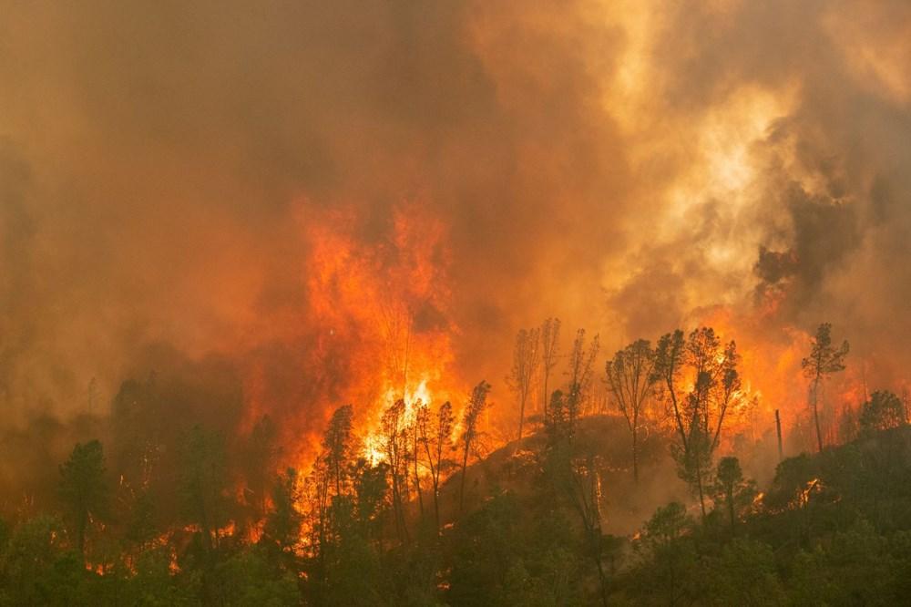 California'da 8 bin kilometrekare alan yandı, rekor kırıldı - 9