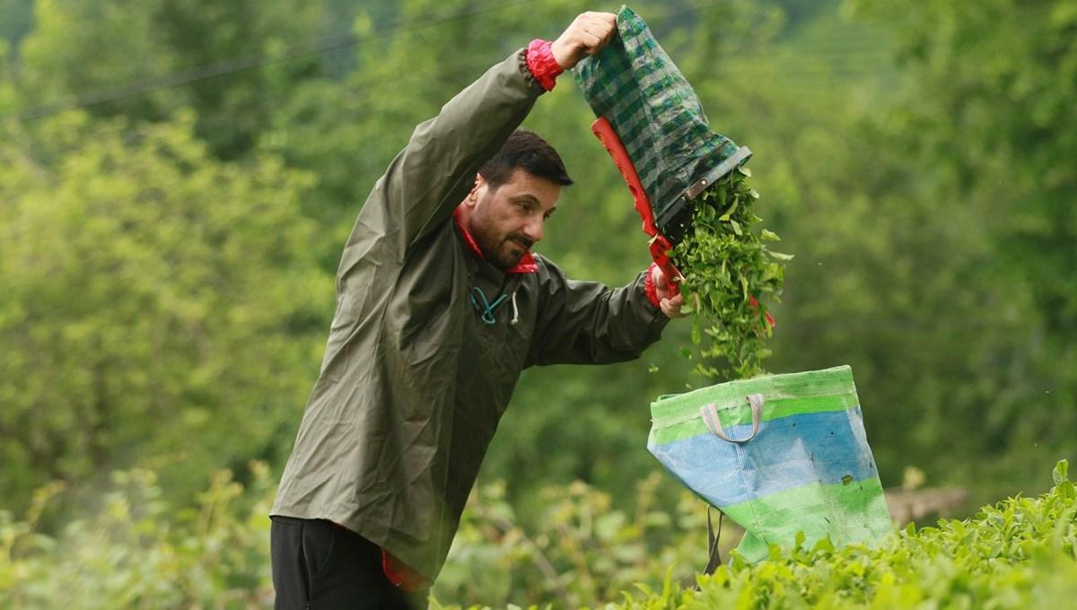 Şarkıcı Davut Güloğlu'nun köy hayatı: Çay toplayıp, organik ürünler yetiştiriyor