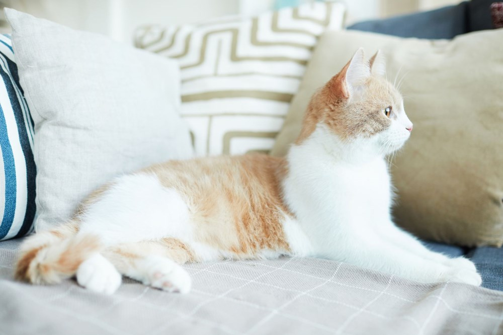 Avrupa kedi sahipliği oranı belli oldu: Türkiye'nin yüzde 19'u kedi sahibi - 4